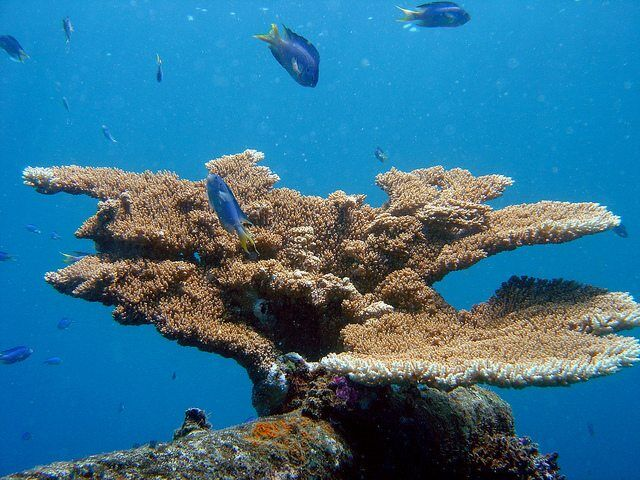reef0787 by NOAA photo library via flickr