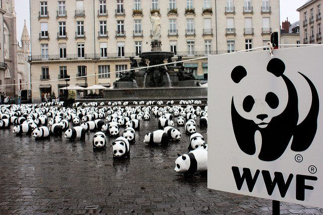 Leader In Inclusive Sustainable Development Applauded By WWF