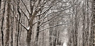 Discover Your Local 'Capability' Brown Landscape This Winter