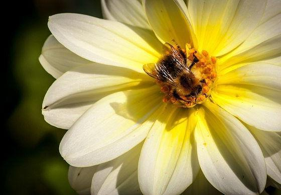 Leading Wildlife And Environment Groups Call For Retention Of Neonic Pesticides Ban
