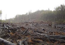 Deforestation by Crustmania via flickr