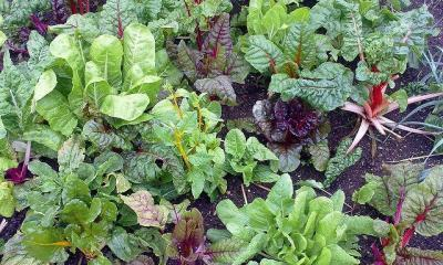 vegetable-garden-by-nick-saltmarsh-via-flickr