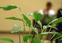 office-plant-by-genildo-marcelo-via-freeimages