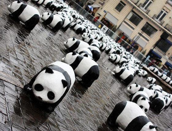 pandas by dochewbacca via flickr
