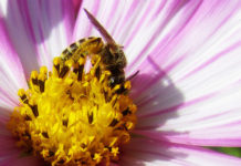 New Friends Of The Earth Report Warns Of Need To Extend Pesticide Restrictions