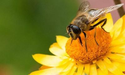bee-happy-by-markus-trienker-via-flickr