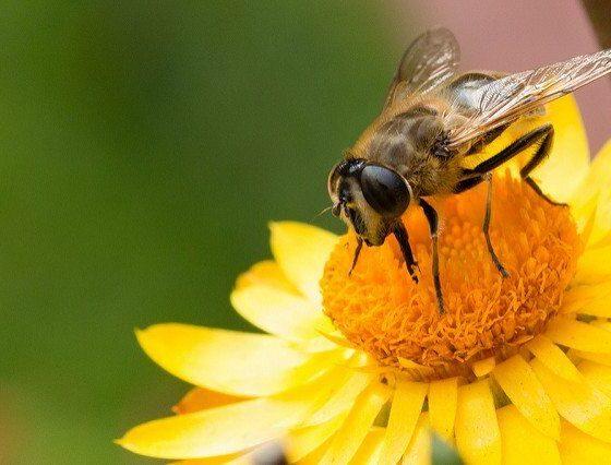 bee-happy-by-markus-trienker-via-flickr