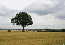 Corley Landscape by Amanda Slater via flickr