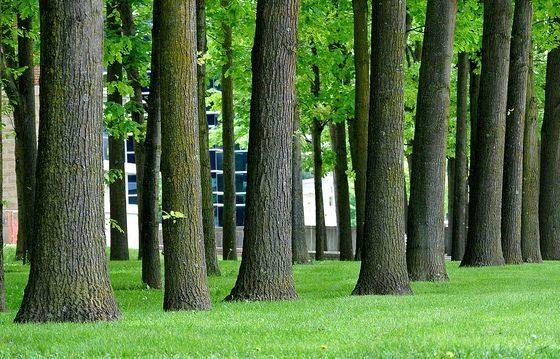Trees by RichardBH via flickr