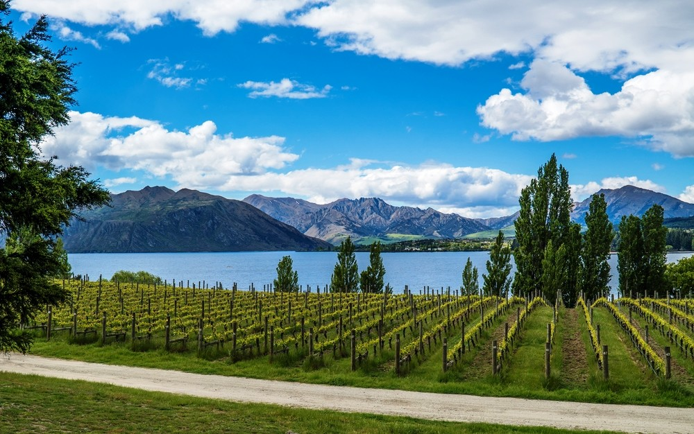 New Zealand green living