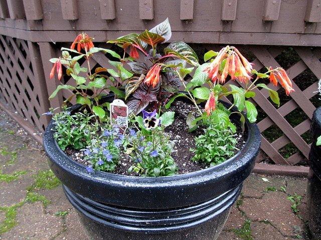 single container garden