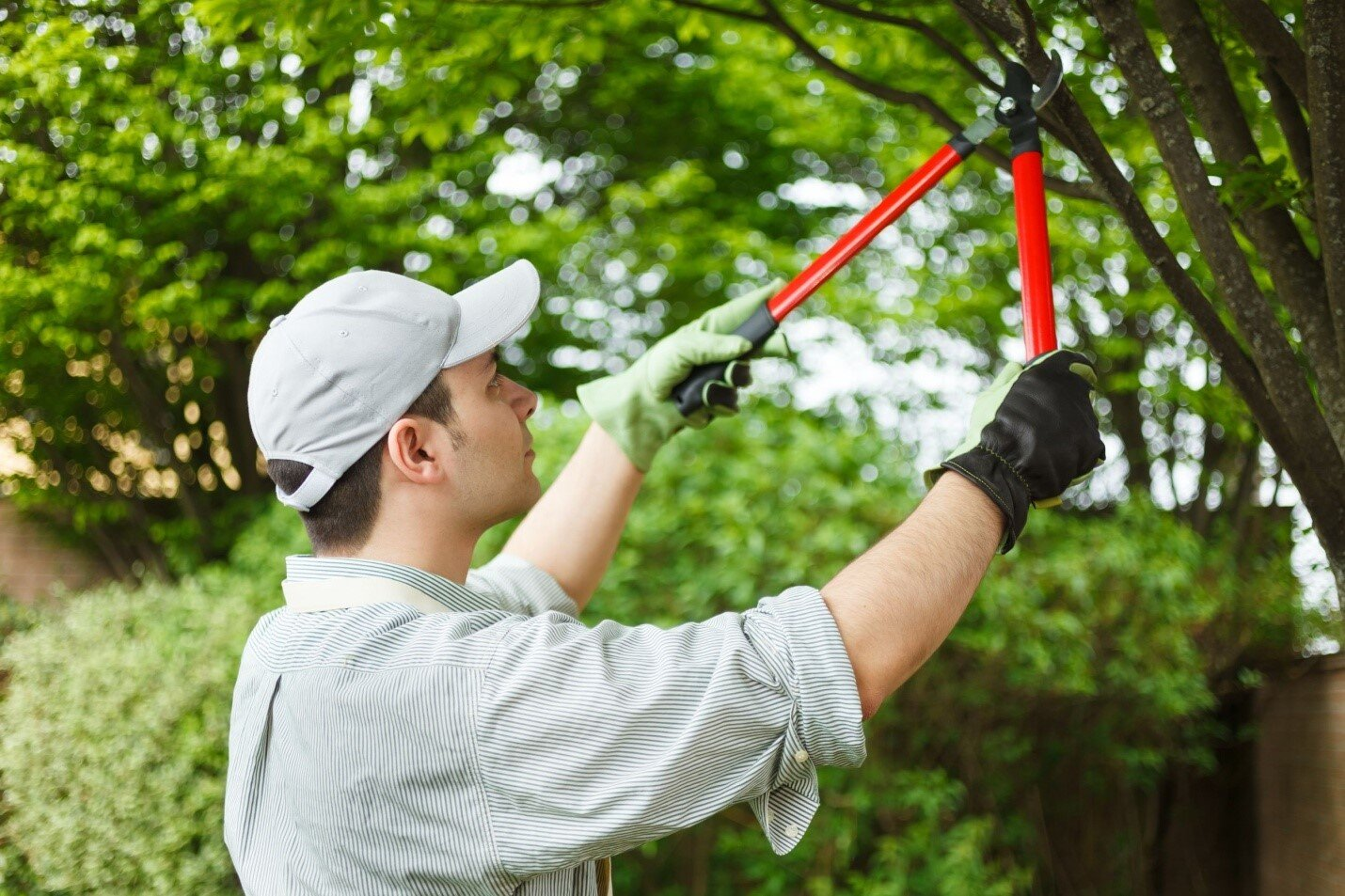 eco-friendly tree maintenance
