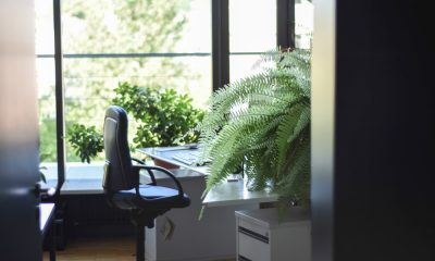 plantscaping corporate spaces