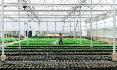 making cannabis production more sustainable