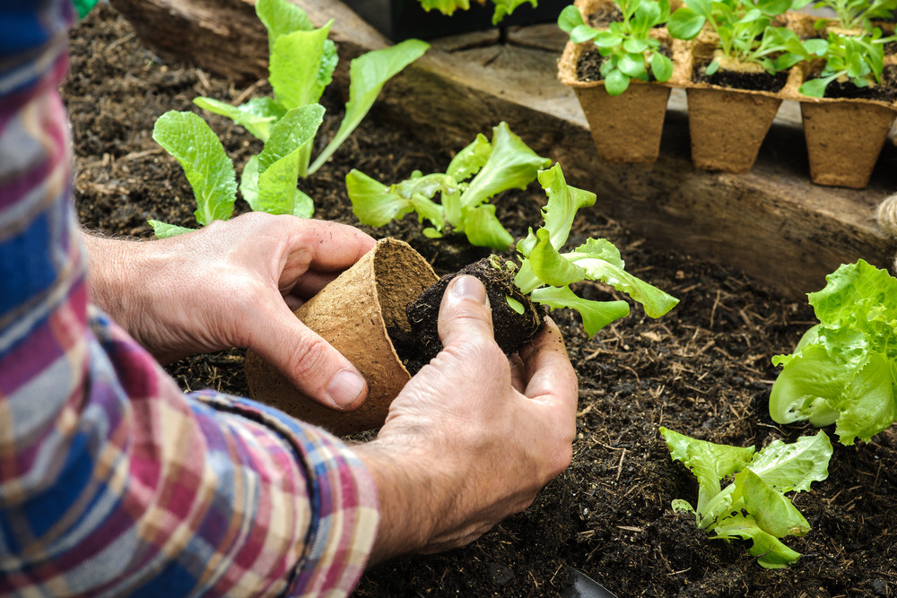 eco-friendly organic gardening