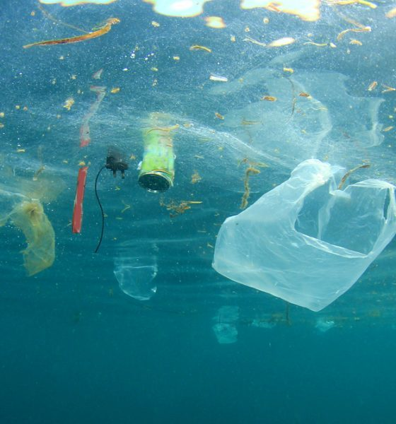 plastic bags destroying sea