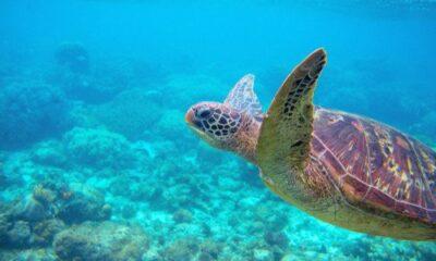 marine life ocean