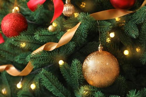 composting Christmas tree