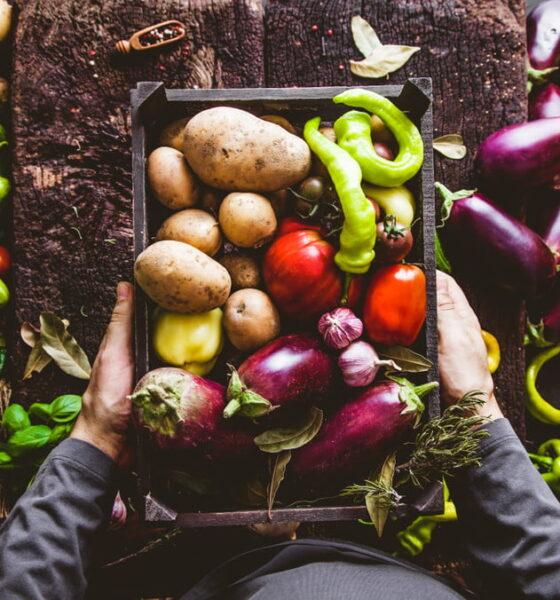 organic garden business