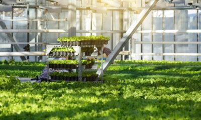 eco-friendly gardeners