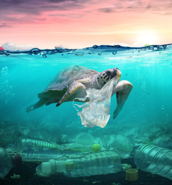 Creating Healthy Oceans to Save the Planet