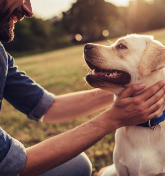 eco-friendly dog ownership for sustainable pet owners