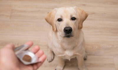 sustainable pet ownership with natural remedies