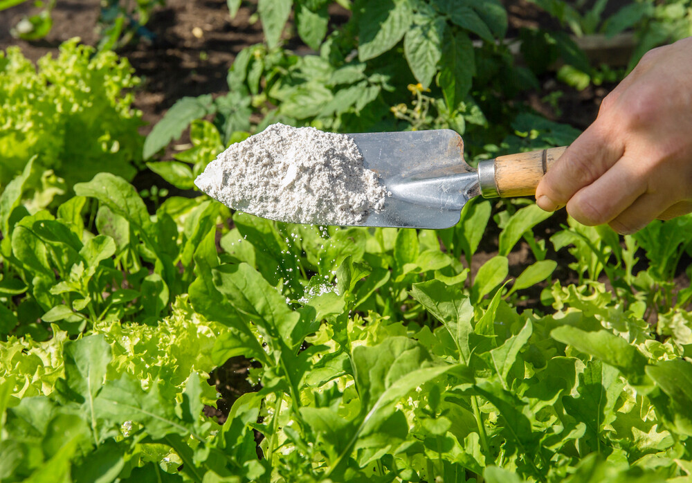 eco-friendly pest control tips