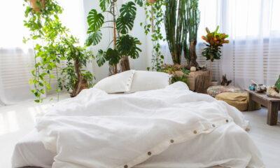 eco-friendly buckwheat pillows