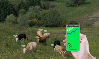 tracking cattle for eco-friendly homesteaders