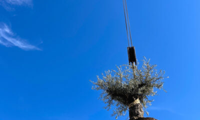 eco-friendly tree removal