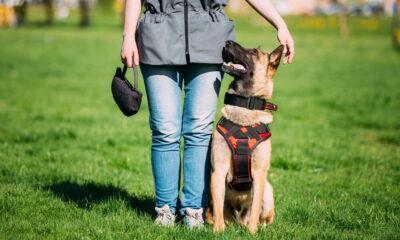 eco-friendly dog training tips