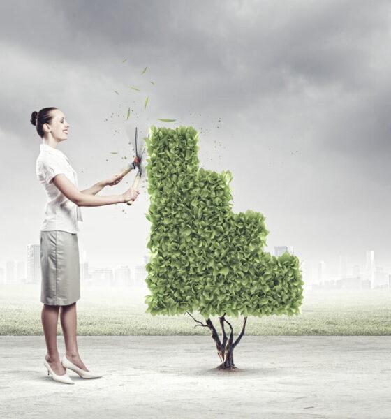 eco-friendly entrepreneurs with startups