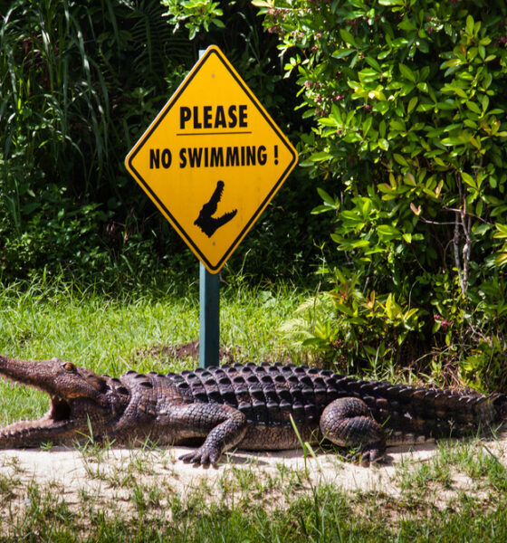 four animals in South Florida affected by environmental practices