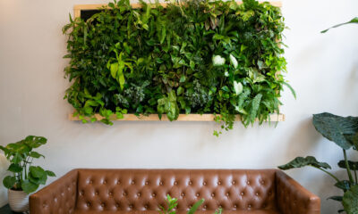 living wall for green home or business