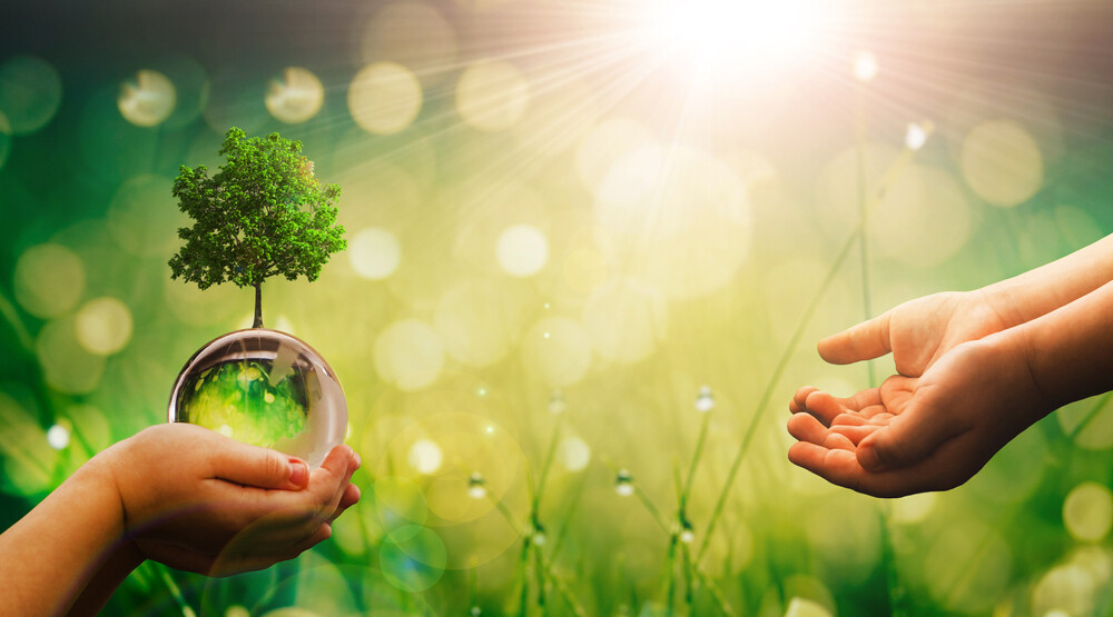 sustainability movement guide